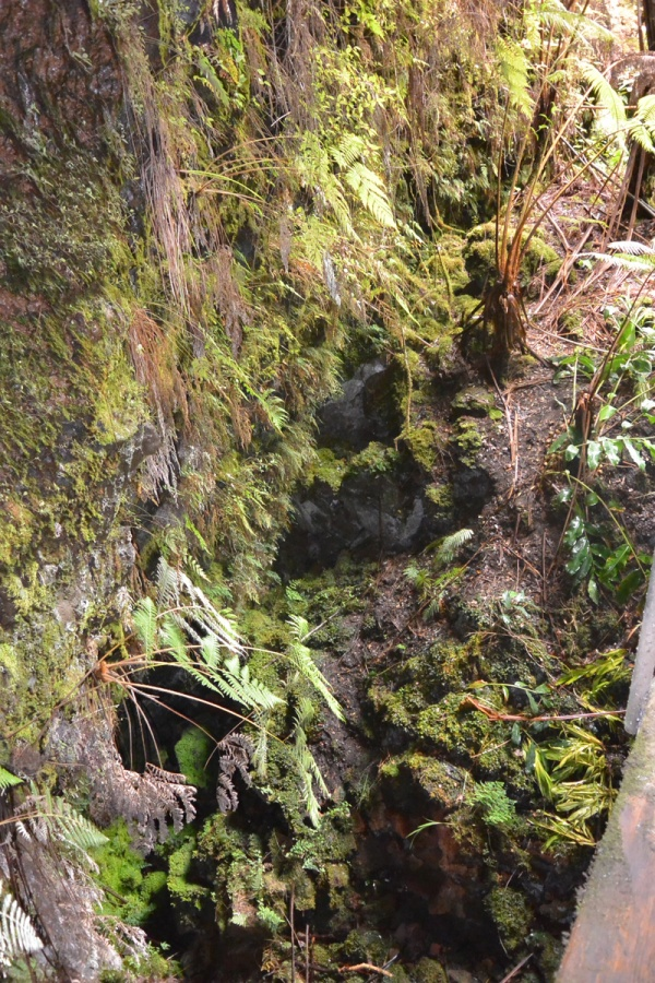 Typical of the ground around the lava tube, it is all crevices and rock with jungle-like overgrowth.