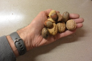 A handful of nuts.